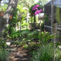 Photo Thumbnail #8: back garden orchid, staghorn ferns, ric rac...