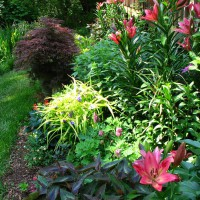 Photo Thumbnail #12: Garden in front of deck