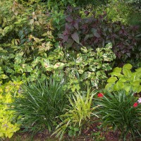 Photo Thumbnail #22: This is my favorite shade garden. This is my...