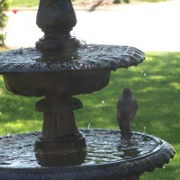 Photo Thumbnail #13: birds love this fountain