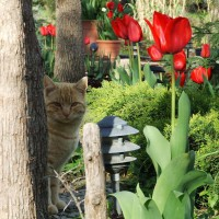 Photo Thumbnail #3: path where in March is lined with red tulips.