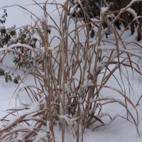 Photo Thumbnail #21: The front garden in the winter.