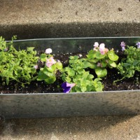 Photo Thumbnail #10: Front porch container with nemesia, begonias,...