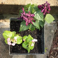 Photo Thumbnail #11: Small porch containers contain salvia and...
