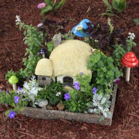 Photo Thumbnail #8: Since I planted it, my fairy house has really...