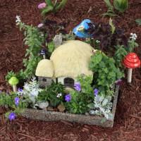 Photo Thumbnail #8: Since I planted it, my fairy house has really...