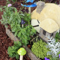 Photo Thumbnail #7: Another view of the fairy house about a month...