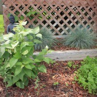 Photo Thumbnail #1: This garden gets partial sun. We are growing a...