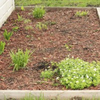 Photo Thumbnail #2: This is the beginning of the shade garden for...