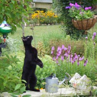 Photo Thumbnail #5: cat looking for birds!!
