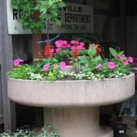Photo Thumbnail #12: This planter is below our deck and under one of...