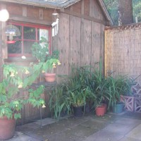 Photo Thumbnail #29: behind barn in the corral patio area