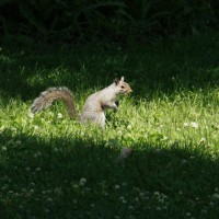 Photo Thumbnail #27: A squirrel enjoying the garden.