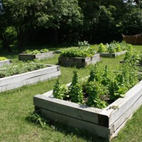 Photo Thumbnail #5: The vegetable beds are one of the newer...