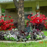 Photo Thumbnail #22: View of bed around pecan tree and azaleas in...