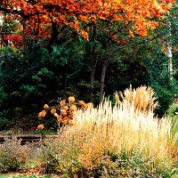 Photo Thumbnail #2: Soft-textured ornamental grasses are...