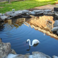 Photo Thumbnail #10: Flamingo cruising the pond ...it's plastic....