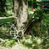 Photo Thumbnail #12: my old antique bike w/basket filled with white...