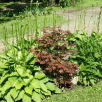 Photo Thumbnail #14: my little hosta garden which covers a steep but...
