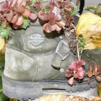 Photo Thumbnail #15: my old boots filled with hens & chicks & a...