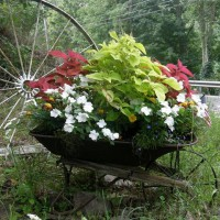 Photo Thumbnail #17: My old wheelbarrow which sits down by the road,...