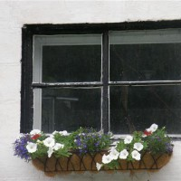 Photo Thumbnail #19: A window box on the front of my house- white...