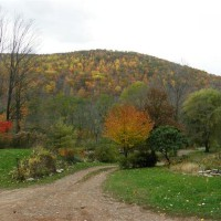 Photo Thumbnail #2: Late November in the Endless Mt.s of PA. My...