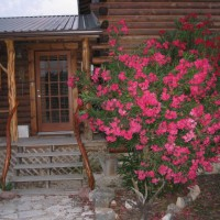 Photo Thumbnail #1: This is an oleander near the kitchen door. It...