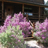 Photo Thumbnail #20: They say when the purple sage blooms, it's...