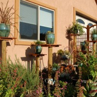 Photo Thumbnail #19: 2010 - The succulent garden has come a long...