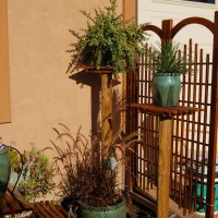 Photo Thumbnail #21: Fall 2010 - Succulent Garden