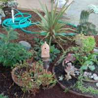 Photo Thumbnail #6: Succulent garden.  Spring 2008