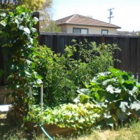 Photo Thumbnail #4: I have two levels in my yard with my vegetable...