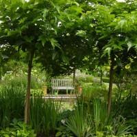 Photo Thumbnail #5: Morus alba Platinifolia