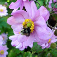 Photo Thumbnail #16: Close-up of anemone