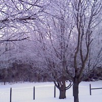 Photo Thumbnail #7: winter in back yard looking across to woods