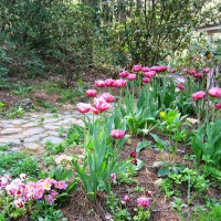 Photo Thumbnail #1: Early Spring bed in front of Crickhollow...