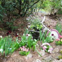 Photo Thumbnail #3: Tulips and primroses in the foreground and a...