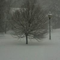 Photo Thumbnail #1: Storm of Jan 2011.