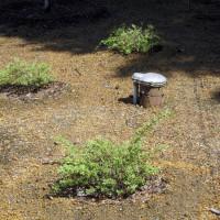 Photo Thumbnail #7: 2011 May 12.  Newly planted Japanese Dappled...