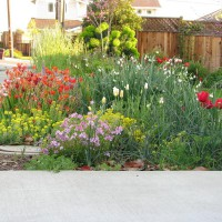 Photo Thumbnail #3: Spring bulbs