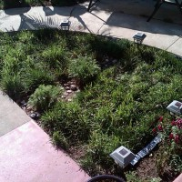 Photo Thumbnail #27: After pic of yard, with a chamomile and river...