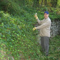 Photo Thumbnail #3: Ivy being cut back on back patio