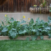 Photo Thumbnail #2: The right side of the garden.  I love to play...