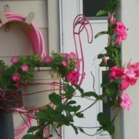 Photo Thumbnail #5: Can't get enough pink!!  Even the water hose is...
