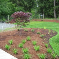 Photo Thumbnail #11: japanese maple, daylilies, pieris japonica and...