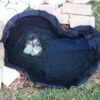Photo Thumbnail #2: Pond I just installed for my sweet hubby....