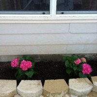 Photo Thumbnail #10: New flower bed just waiting for more to be...