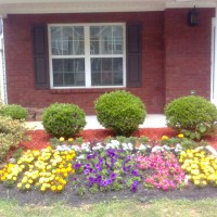 Photo Thumbnail #2: Last summer my hubby planted these annuals....