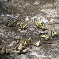 Photo Thumbnail #7: Butterflies on the banks of the Tennessee River